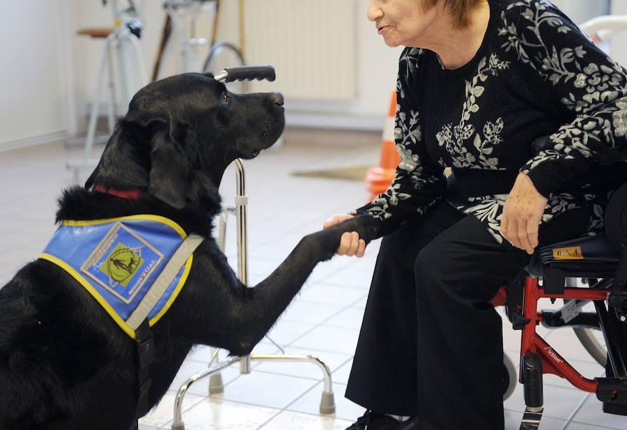 Por qué el perro labrador es tan terapeútico?   El Norte de Castilla